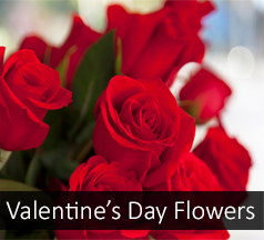 valentines day flowers plants gifts